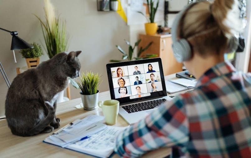 Salon, bureau, femme, casque audio, ordinateur, chat