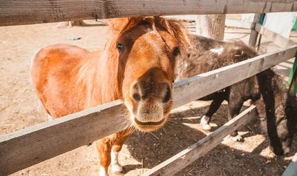 Quel recours face aux nuisances provoquées par les animaux de mon voisin?