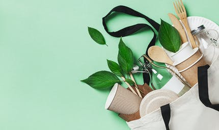 Vaisselle jetable végétale : gare aux substances nocives pour la santé et l'environnement