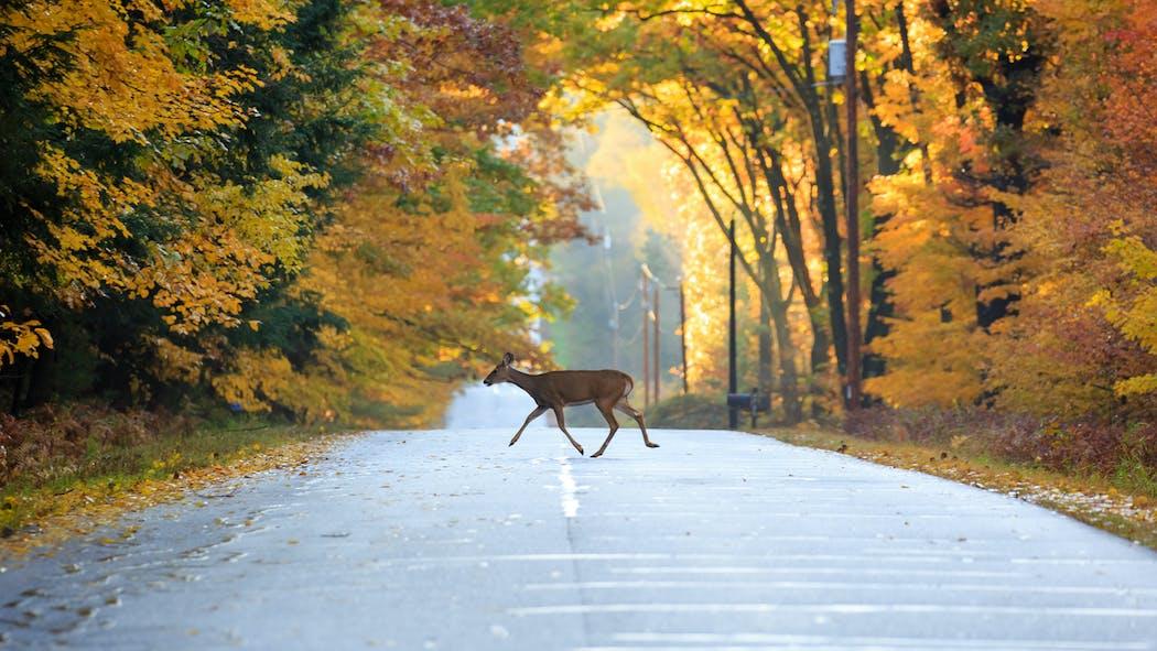 Auto: que faire après avoir heurté un animal sauvage sur la route?