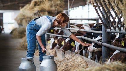 Retraite des conjoints d'agriculteurs : une proposition de loi veut les revaloriser
