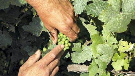 Un nouveau dispositif d'assurance récolte pour les agriculteurs